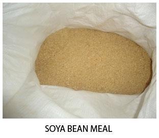 soya-bean
