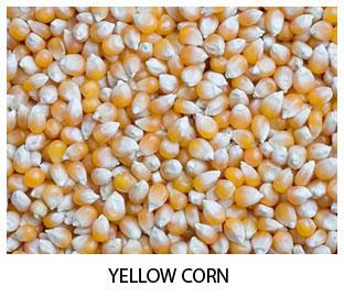 yellow-corn